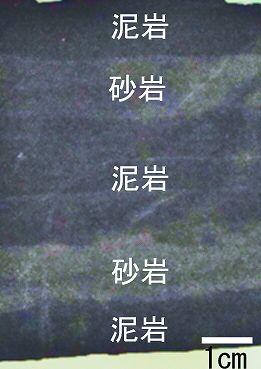 砂岩と泥岩の互い違いの地層 岡山県内の砂岩/県内全域によく見られ,三畳紀のもの と,第三紀のもの